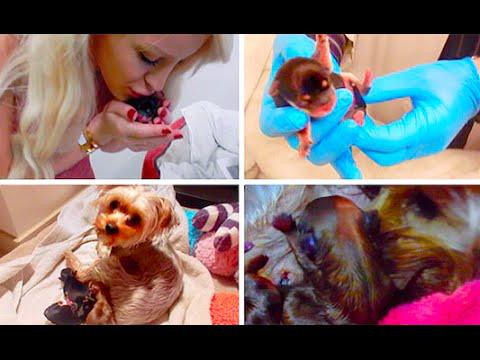MY DOG GIVING BIRTH!!! | Gigi