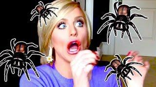 A Spider Attacked Me! | Gigi