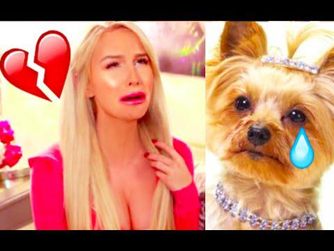 MY DOG WAS RAPED | Gigi